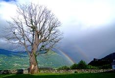 Il cielo e l'albero dopo la pioggia Immagini Stock Libere da Diritti