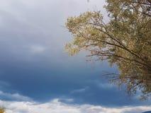 Il cielo nuvoloso con di olivo va su priorità alta Fotografia Stock