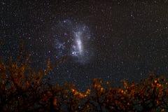 Il cielo stellato e la grande nuvola di Magellanic maestosa, eccezionale luminoso, catturati in Africa Rami e foglie dell'acacia  Immagine Stock Libera da Diritti