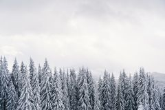 Il cielo tempestoso e la foresta nevosa abbelliscono in montagne Immagine Stock Libera da Diritti