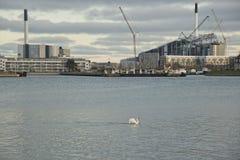 Il cigno nell'acqua a Copenhaghen, Danimarca immagini stock