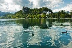 Il cigno su un lago ha sanguinato con il castello su una collina in un fondo, alpi slovene Fotografia Stock
