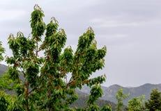 Il ciliegio sui precedenti delle montagne Fotografia Stock Libera da Diritti