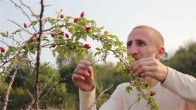 Il cinorrodo della frutta raccoglie la gente archivi video