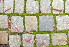 Il ciottolo che pavimenta il sentiero per pedoni con le foglie variopinte asciutte di autunno, granito cobbles immagini stock