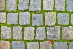 Il ciottolo che pavimenta il sentiero per pedoni con le foglie variopinte asciutte di autunno, granito cobbles fotografia stock