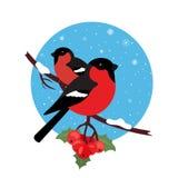 Il ciuffolotto è l'inverno dell'uccello Vettore dell'illustrazione nella progettazione piana moderna Icona rotonda Immagini Stock Libere da Diritti