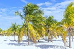 Il cocco sta brillantemente fuori contro lo sfondo di un clo Immagini Stock
