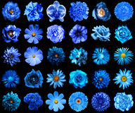Il collage del blu naturale e surreale fiorisce 30 in 1 Fotografia Stock