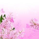 Il collage del giacinto e delle farfalle rosa di colori Fotografie Stock Libere da Diritti