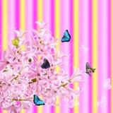 Il collage del giacinto e delle farfalle rosa di colori Fotografia Stock Libera da Diritti