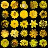 Il collage di giallo naturale e surreale fiorisce 25 in 1 Fotografia Stock Libera da Diritti