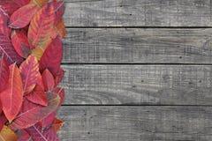 Il color scarlatto delle foglie cadute rosse su fondo di legno rustico nel colore di autunno con lo spazio della copia per il cam immagini stock libere da diritti