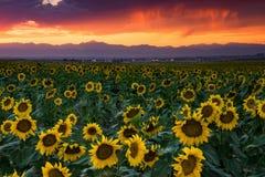 Il Colorado Front Range Rockies At Sunset fotografia stock libera da diritti