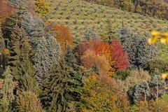 Il colore caldo dell'autunno Fotografia Stock Libera da Diritti