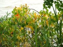 Il colore dell'autunno ha cominciato nei primi giorni dell'estate fotografia stock