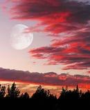 Il colore della natura fantastico Fotografia Stock