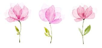 Il colore di acqua dell'immagine, il tiraggio della mano, fiori è tre viste rosso-chiaro royalty illustrazione gratis
