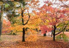 Il colore di autunno lascia al tempio di Tofukuji a Kyoto, Giappone fotografia stock