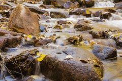 Il colore di autunno lascia lo scorrimento dell'acqua della corrente Fotografie Stock