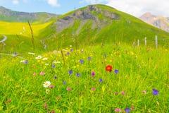 Il colore di estate fotografie stock