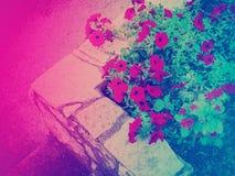 Il colore di pendenza ha tonificato l'aiola in una città fotografia stock