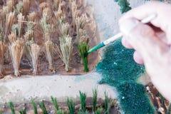 Il colore dipinto fa un modello di piantatura del riso Fotografia Stock Libera da Diritti