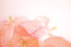 Il colore dolce fiorisce nello stile morbido della sfuocatura e di colore su struttura della carta del gelso fotografia stock