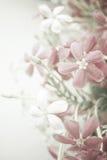 Il colore dolce fiorisce nello stile morbido su struttura della carta del gelso immagine stock