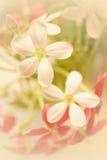Il colore dolce fiorisce nello stile morbido su struttura della carta del gelso fotografia stock