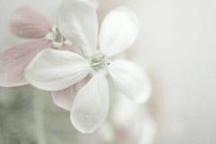 Il colore dolce fiorisce nello stile morbido su struttura della carta del gelso fotografia stock libera da diritti