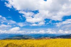 Il colore dorato ha fatto un passo riso archivato in Chiang Mai, Tailandia del Nord Immagini Stock