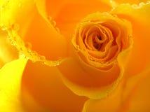 Il colore giallo è aumentato Fotografie Stock Libere da Diritti