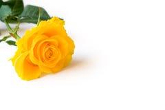Il colore giallo è aumentato Fotografia Stock