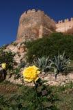 Il colore giallo è aumentato a Almeria Fotografie Stock Libere da Diritti