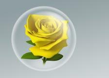 il colore giallo 3D è aumentato in sfera di vetro Immagine Stock Libera da Diritti