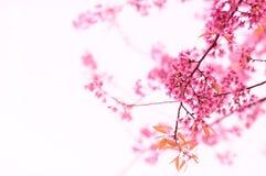 Il colore rosa Fotografie Stock Libere da Diritti