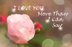 il colore rosa di giardino è aumentato Immagine Stock Libera da Diritti