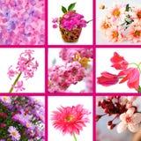 Il colore rosa fiorisce il collage Fotografia Stock