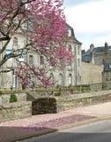 Il colore rosa fiorisce l'albero Fotografia Stock Libera da Diritti