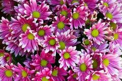 Il colore rosa fiorisce la priorità bassa _1 Fotografia Stock Libera da Diritti
