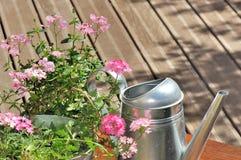 Il colore rosa fiorisce un'acqua della latta su un terrazzo Fotografie Stock