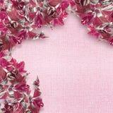 Il colore rosa lascia il bordo Immagine Stock