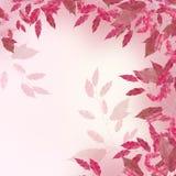 Il colore rosa lascia il bordo Fotografia Stock