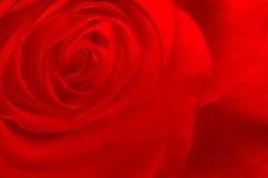 Il colore rosso è aumentato Immagine Stock Libera da Diritti