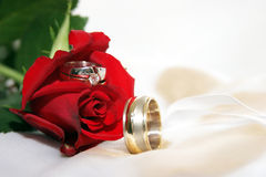 Il colore rosso è aumentato con gli anelli di cerimonia nuziale Fotografie Stock