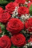 Il colore rosso è aumentato con i fiori bianchi Immagine Stock Libera da Diritti