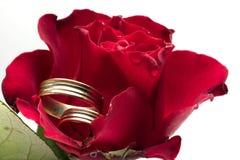 Il colore rosso è aumentato - concetto di cerimonia nuziale fotografia stock libera da diritti