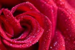 Il colore rosso è aumentato nelle gocce dell'acqua Fotografie Stock Libere da Diritti