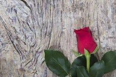Il colore rosso è aumentato per il giorno del `s del biglietto di S Fotografia Stock